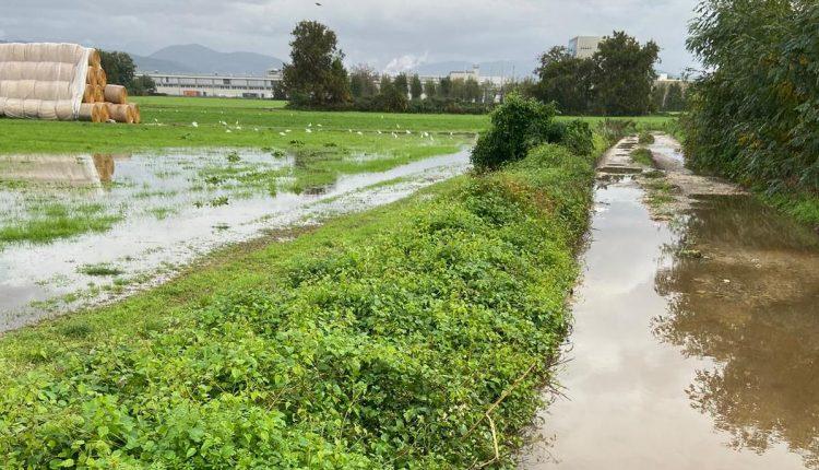 Il maltempo intercorso tra il 3 ed il 25 novembre ha particolarmente colpito le imprese agricole della Campania, con un carico di acqua record, che ha prodotto notevoli danni su oltre 2000 ettari nei comprensori di competenza del Consorzio generale di bonifica del bacino inferiore del Volturno